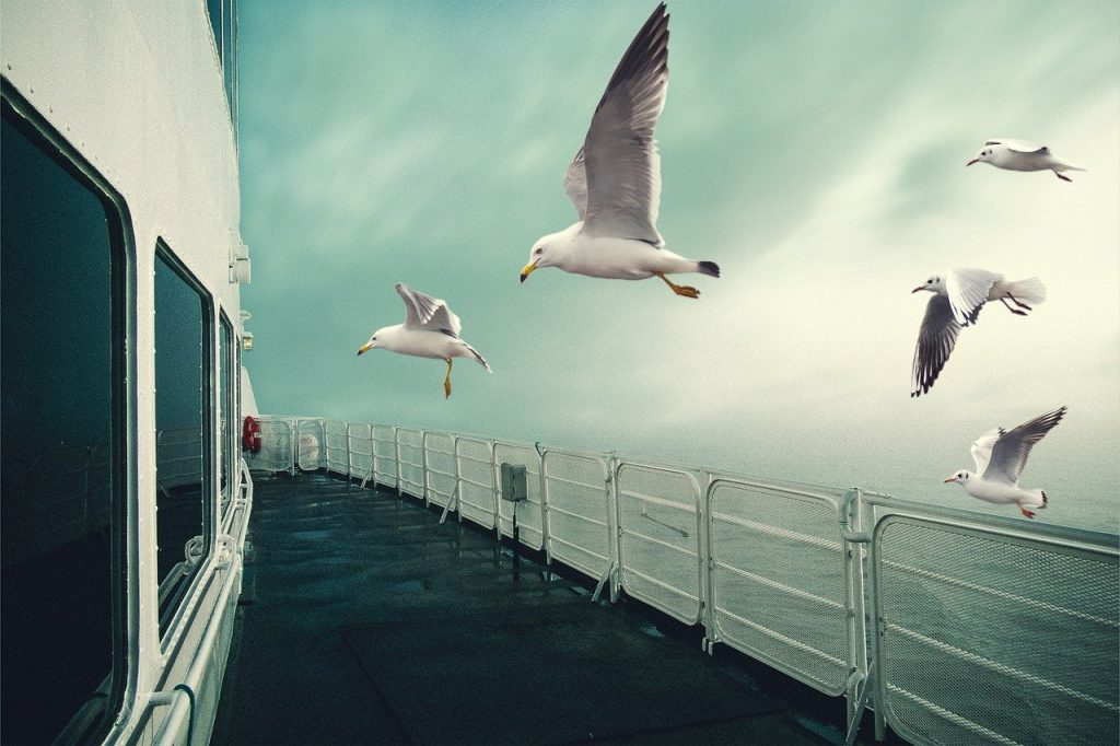 seagulls, flying, ship